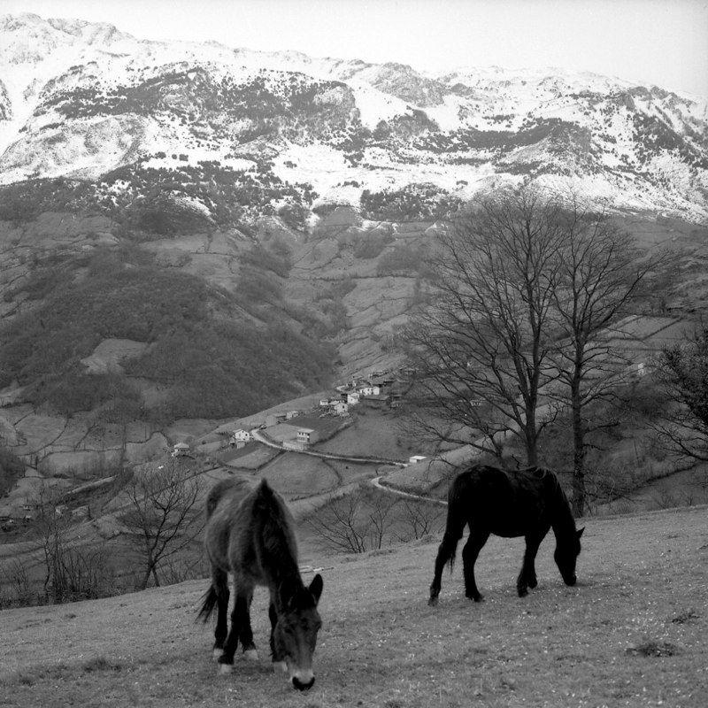 Pueblos de La Rebollá y Les Gateres (Riosa) con la Sierra del Aramo al fondo. Crédito de imagen: archivo de José Ramón Lueje, Pueblo de Asturias (Gijón).