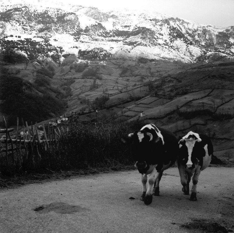 Pueblo de Les Gateres (Riosa) con la Sierra del Aramo al fondo. Crédito de imagen: archivo de José Ramón Lueje, Pueblo de Asturias (Gijón).