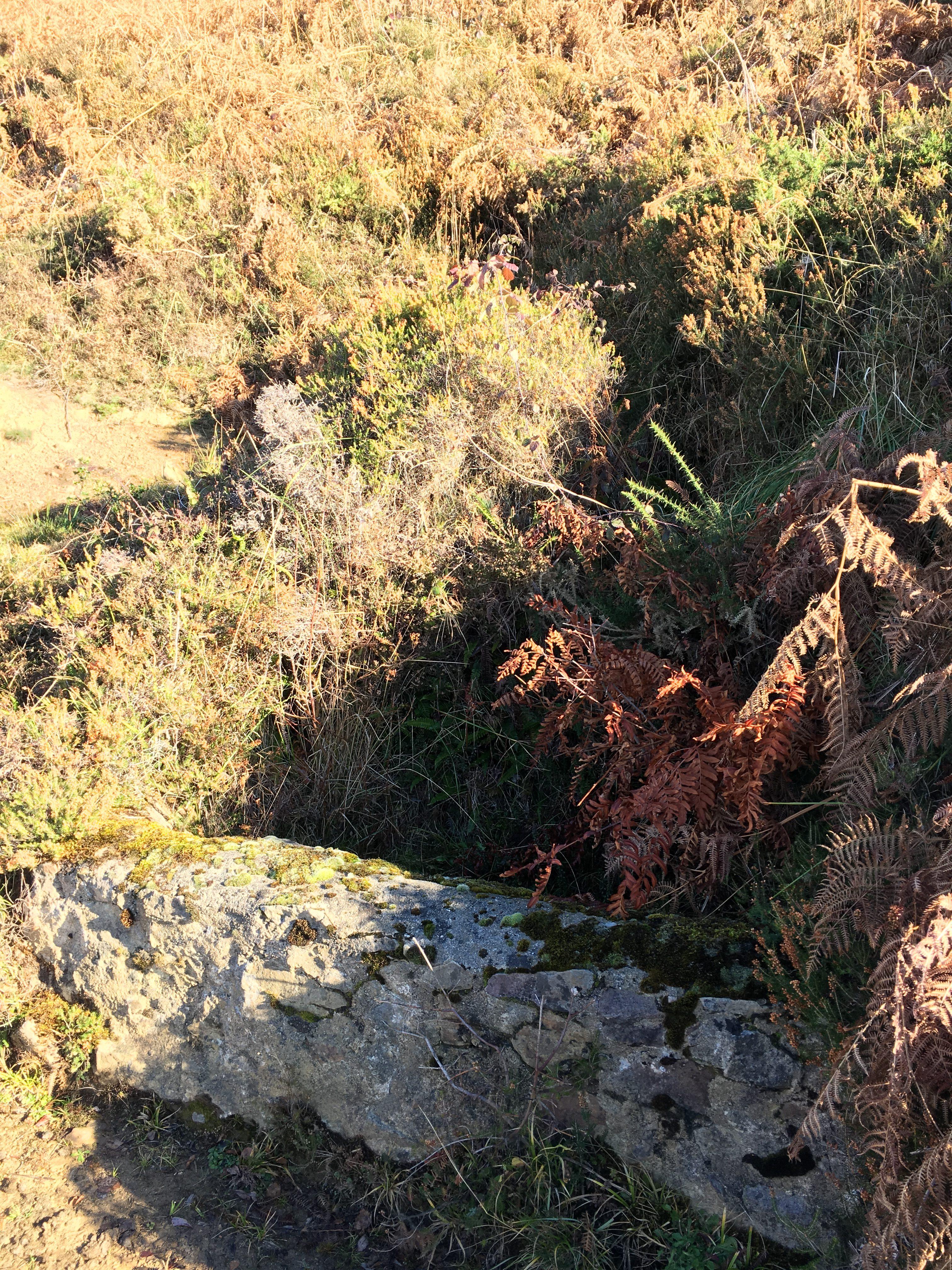 Fuente La Carba (Riosa, Valle de La Xuncar)